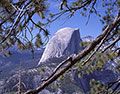 Half Dome Trees, Yosemite National Park