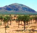 The Olgas and Stunted Trees II